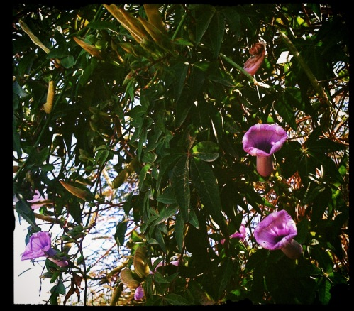 flowers in the reserva